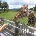 Feed the Giraffes! Only $2 per person.