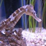 Seahorse Kingdom