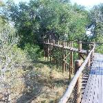 boardwalk at mapungubwe national park