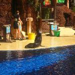 oasis sea lion show