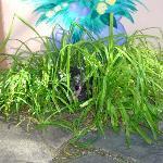 Ronnie enjoying the plant life