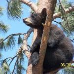 Bear Country, SD