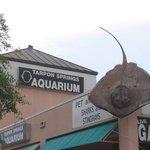 Konger Tarpon Springs Aquarium Photo