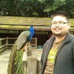 Woodland Park Zoo ภาพถ่าย