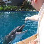 Feeding Flipper Sea World San Antonio