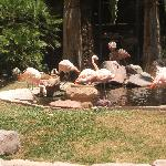 Flamingos at the Flamingo