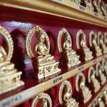Budas to adopt