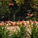 zoo - singapore