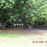 Banyan Tree Square-Lahaina