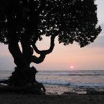 The Beach Tree at Sunset