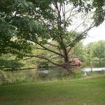 Buckingham Palace gardens (lake)