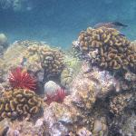 More examples of the reef area for snorkeling
