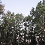 eucalyptus trees backdrop to pension