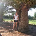 palmier autour de la piscine