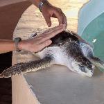 Turtles, something special!