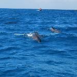 Delfini a Kizimkazi