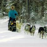 Snowy Owl Sled Dog Tours ภาพถ่าย