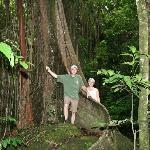 One of the many trees in the rainforest