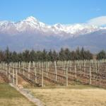 The  Andes and vineyards
