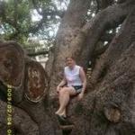 Banyan Tree Park ภาพถ่าย