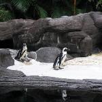 Penguins in Hawaii!