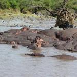 Serengeti Hippo Pool ภาพถ่าย