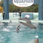 Aquarium ภาพถ่าย