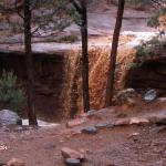 "Rain run off in Sedona Park.  Water was red from ""dust""."