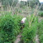 fresh herbs from their organic farm