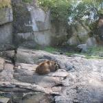 Skansen - Björnen sover björnen sover.... HALLÅ björnen!! Kan du kolla hit!!