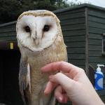 me fussing Snowy the european Barn owl- Screech Owl Sanctuary - Cornwall :o>