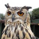 Screech Owl Sanctuary - Cornwall :o>