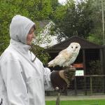 Me (looking like a scally wearing Ian's coat) flying Snowy the European Barn Owl at Screech Owl