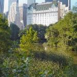 a view from Central Park....