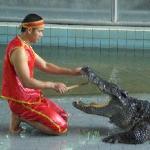 Go to the Crocodile Farm..make it snappy!
