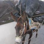the rubbish donkey of the caldera haha