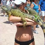 Me with the iguanas. I'll love you forever.