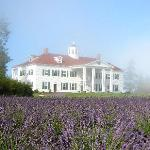 Inn with Lavender and fog