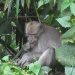nos amis les singes