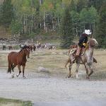 Bringing in the horses