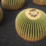 Jardin de Cactus ภาพถ่าย