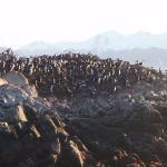 Isla de Los Pajaros ภาพถ่าย