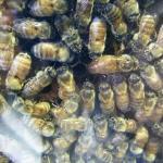 Huka Honey Hive ภาพถ่าย