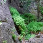 fern in the valley