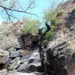Chihuahuan Desert Nature Center & Botanical Garden ภาพถ่าย