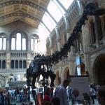 Nature's History museon aula. Pääsy on ilmanen, joten muitakin turisteja löyty paikanpäältä.