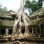 Ta Prohm. 