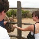 Me feeding an ostrich!! It was scary.