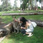 Lone Pine Koala Sanctuary ภาพถ่าย