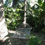 Coconut grove hammocks -Sands Grace Bay